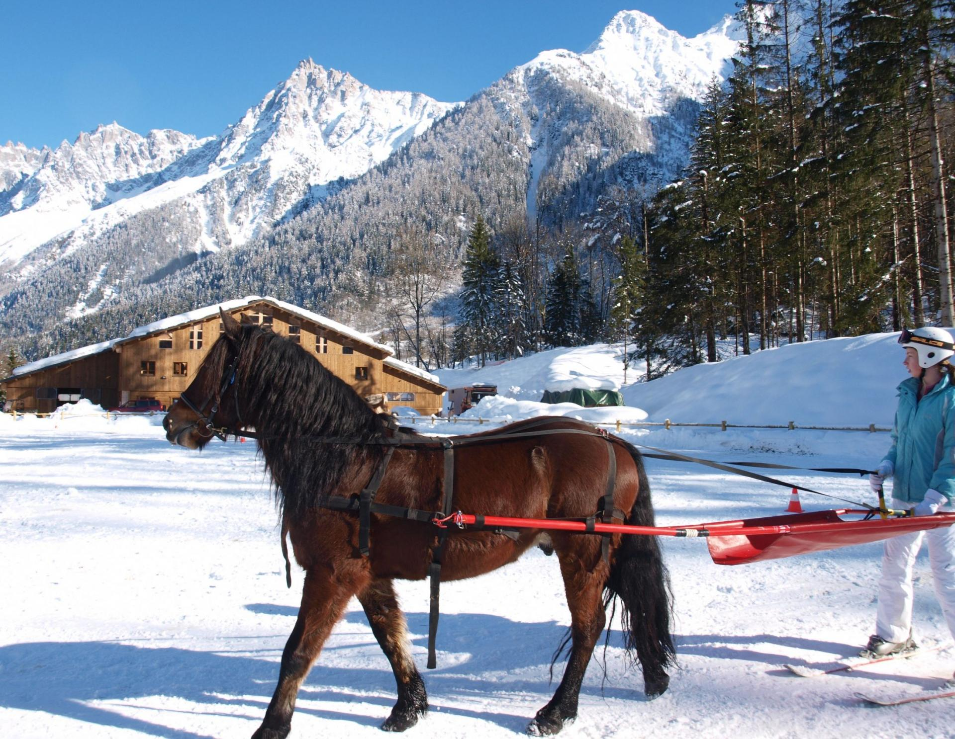 Skijoering