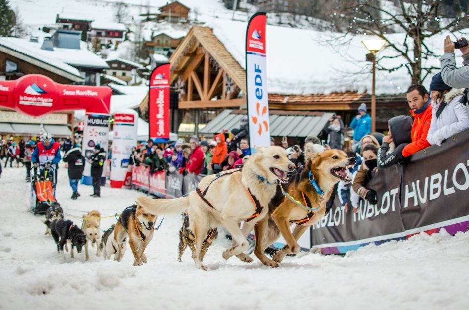Husky racing events in the Alps
