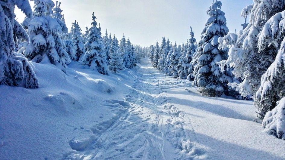Reindeer tracks, Christmas, Snow, Trees